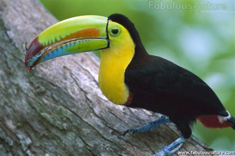 exotic birds pictures exotic birds 20 exotic birds