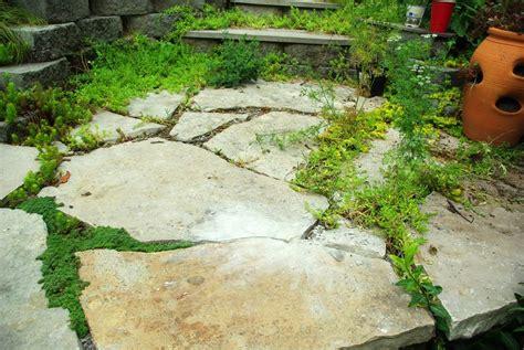patio gap filler filling gaps in patio slabs crunchymustard
