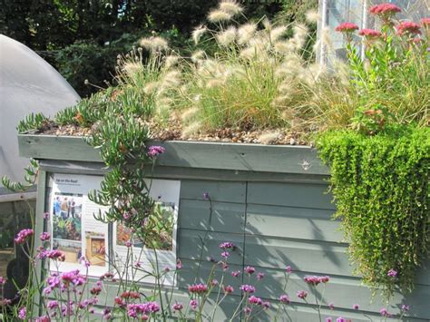 living roof bike shed 1000 ideas about shed roof on building a shed