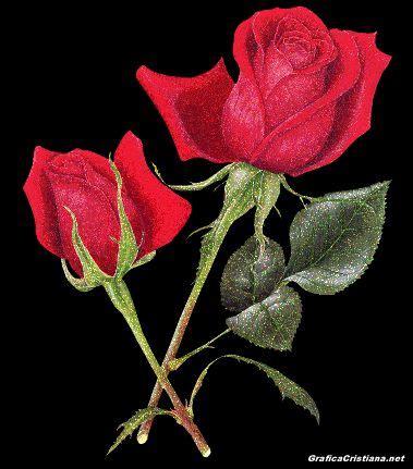 imagenes de flores virtuales fondos de flores y rosas rojas con movimiento im 225 genes de