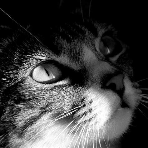 cat wallpaper hd ipad 50 hd cat ipad wallpapers