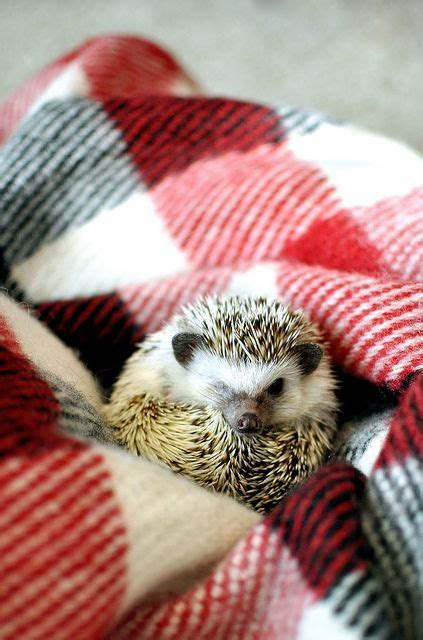 best bedding for hedgehogs 17 best ideas about hedgehog bedding on pinterest
