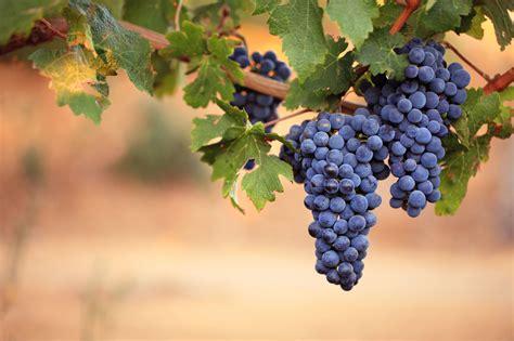 Lorimar Winery Wedding – Wedding At Lorimar Vineyards And Winery In Temecula, CA