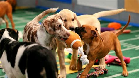 animal planet puppy live puppy bowl 14 betting odds the network