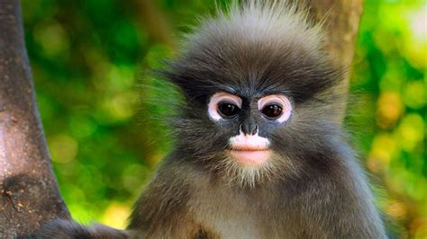K Monkey by 4k Monkey Wallpapers High Quality Free