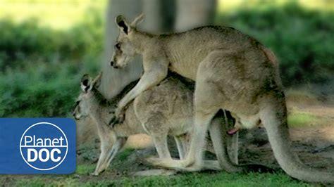 como se aparean los animales con humanos relationship animal mating sexual conflict