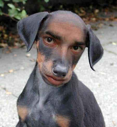human dogs human looking jpg photo by pirafu photobucket