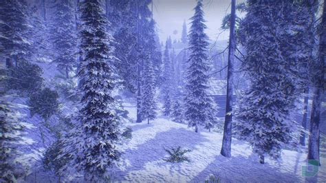 snow forest wallpapers  background pictures