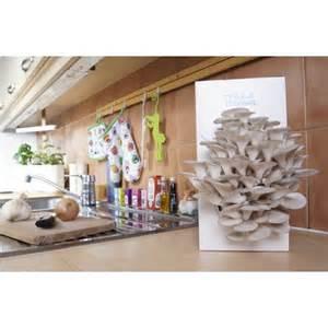 kit de culture de chignons pleurotes gris pr 234 t 224 pousser
