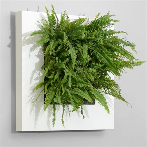 plant walls   wall art eco green office plants