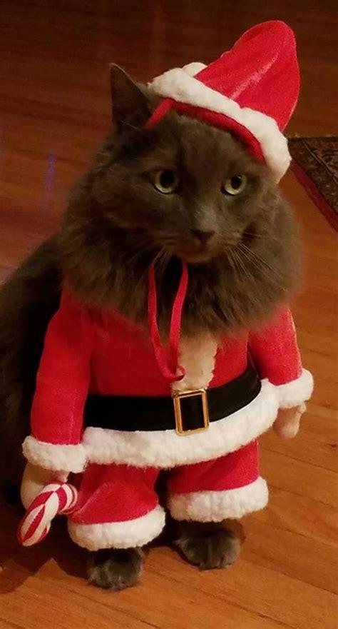 and cat clinic dr katy pet show cat clinic arlington va cat only veterinarian hospital