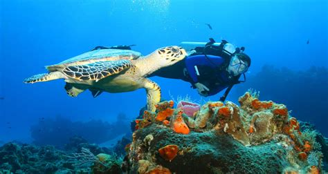 dive cozumel cozumel mexico travel info hotels tours transfers more