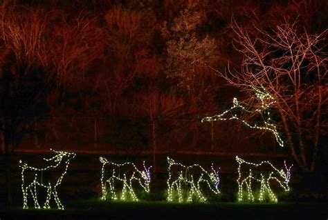 zoo lights near me where to see holiday lights around the bay area culture