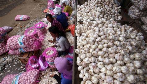 petani mulai tanam bawang putih bisnis tempo co