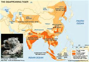 tiger map tiger the disappearing encyclopedia children s