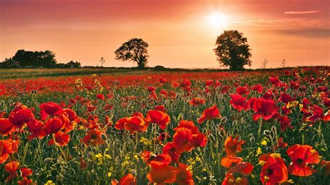 free wallpaper remembrance day remembrance day wallpapers wallpaper cave