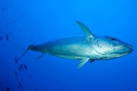 fiji fishing holidays travelco