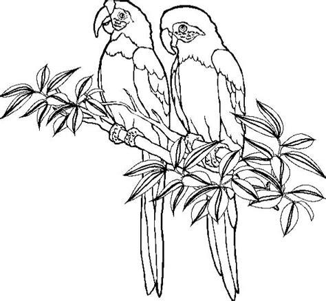 parrot coloring page parrot coloring pages coloringpages1001