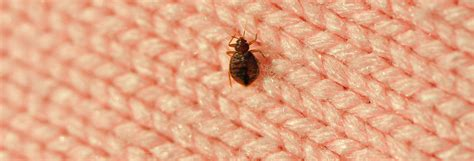checking for bed bugs how to check for bed bugs in a hotel consumer reports