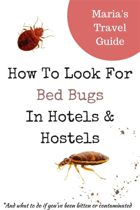 bed bugs travel the 25 best bed bugs hotels ideas on pinterest bed bug