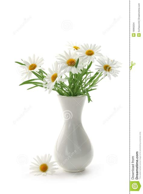 Daisies In A Vase by Daisies In Vase Stock Images Image 18960204