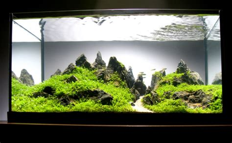 aquascaping magazine aquascaping world magazine interview with peter kirwan