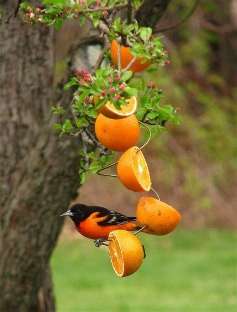oriole bird feeder plans free woodworking projects plans