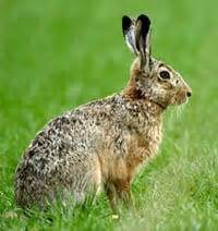 the rabbit the solution to our domesticated issues books for pets or conservative