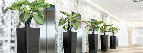 plant for office indoor plant hire office plants indoor plants online