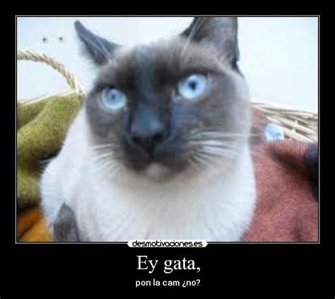 imagenes chistosos de gatos videos graciosos de gatos google