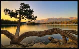 gambar pemandangan pohon unik di tepi danau apps directories