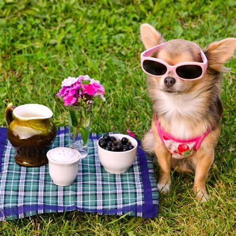 canine care diploma course