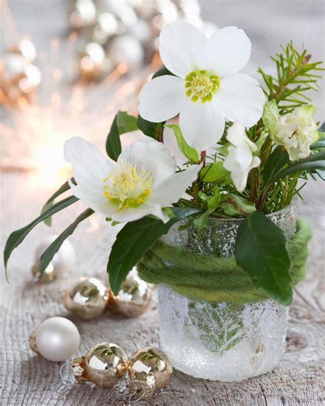 tischdeko christrose die besten 25 christrose ideen auf pinterest winter