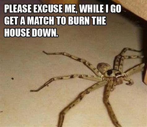 Spider In House Meme - i hate spidesr meme hate spiders saturday spiders