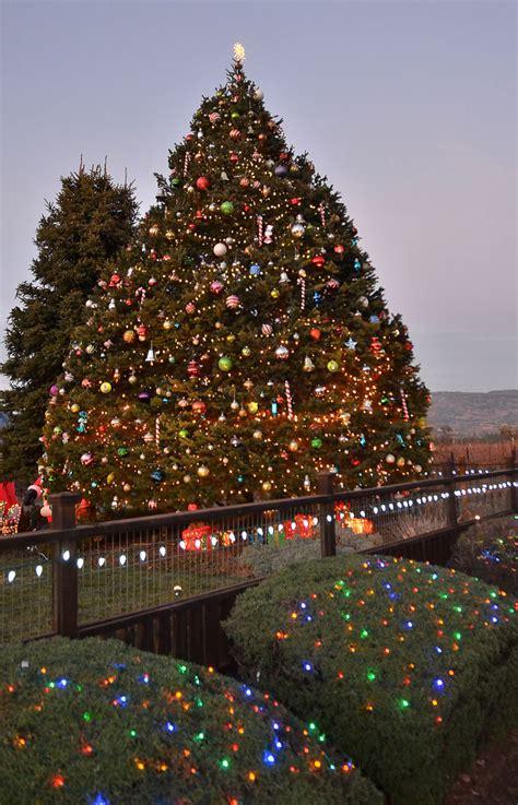 memorial christmas tree returns