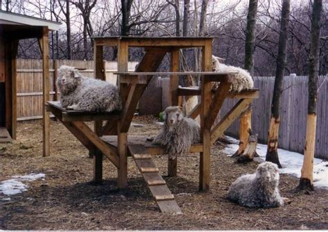 goat house goat play structure petbeds houses and accessories pinterest love this