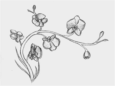 orchid tattoo outline pictures to pin on pinterest