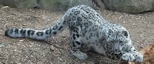 Rarest In The World Top 5 Most Animals In The World Www Imgkid