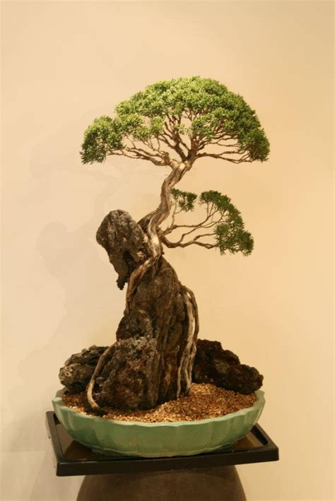 Bonsai Baum Arten by Great Bonsai Tree Bonsai