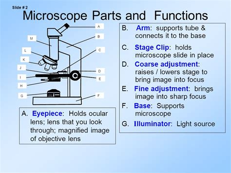 compound light microscope parts and functions parts of the compound light microscope ppt