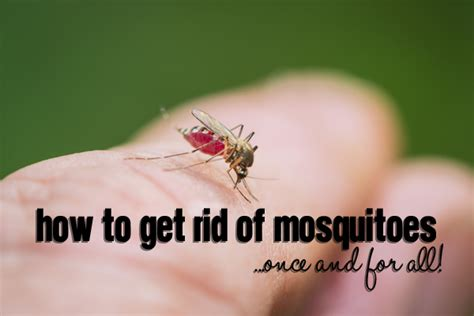 how to get rid of mosquitoes once and for all