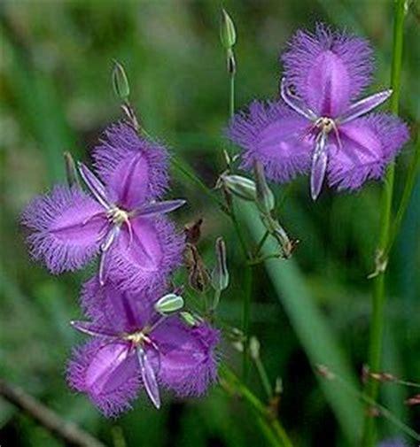 fiori di bach torino floriterapia naturopata stefano reguzzi piazza statuto