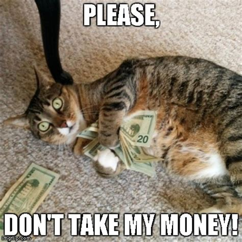 Money Meme - money cat imgflip