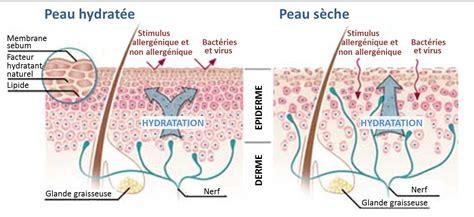hydratation et beaut 233 les secrets d une peau et
