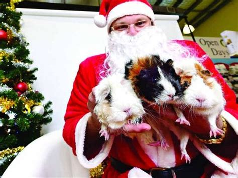 not all pets were good when santa came to visit sunshine