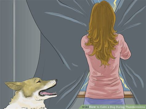 how to comfort a dog during thunderstorms how to calm a dog during thunderstorms 12 steps with