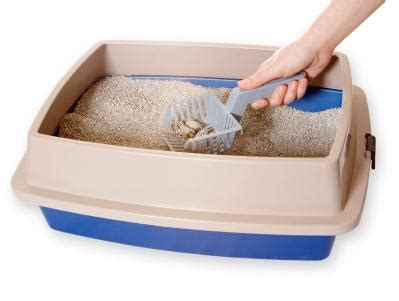 Cat Litter Box Tempat Pup Kucing disposing of litter lovetoknow