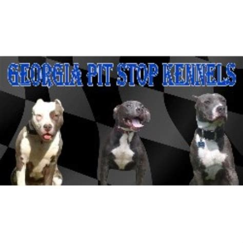 pitbull puppies for sale in delaware pitbull terrier american puppies for sale in de md ny nj