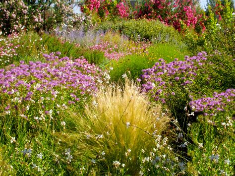 dr dan s garden tips did someone say xeriscaping