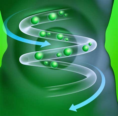alimenti probiotici e prebiotici probiotici e prebiotici qual 232 la differenza